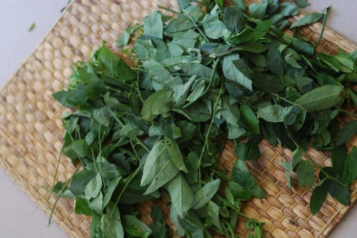 katuk leaf recept
